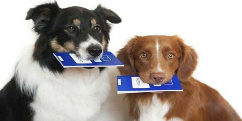 Документы для вывоза за границу собаки, кота: какие нужны ветеринарные справки и прививки для перевозки животных в самолете